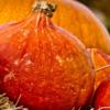 Тыква оранжевый Хоккайдо