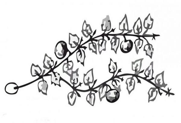 Формирование тыквы в две плети