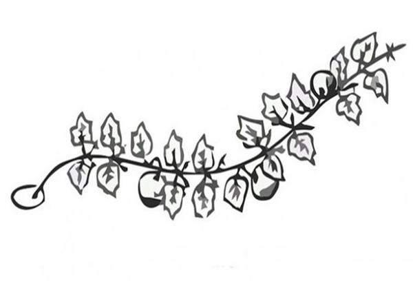 Формирование тыквы в одну плеть